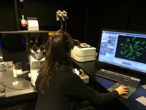 Meios studerad i nanoskopi.
